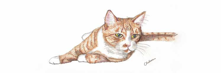 Colour Pencil drawing of an orange cat